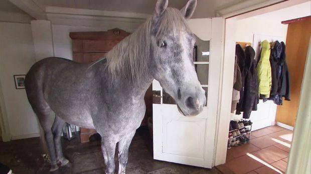 Da Steht Ein Pferd Auf Dem Flur