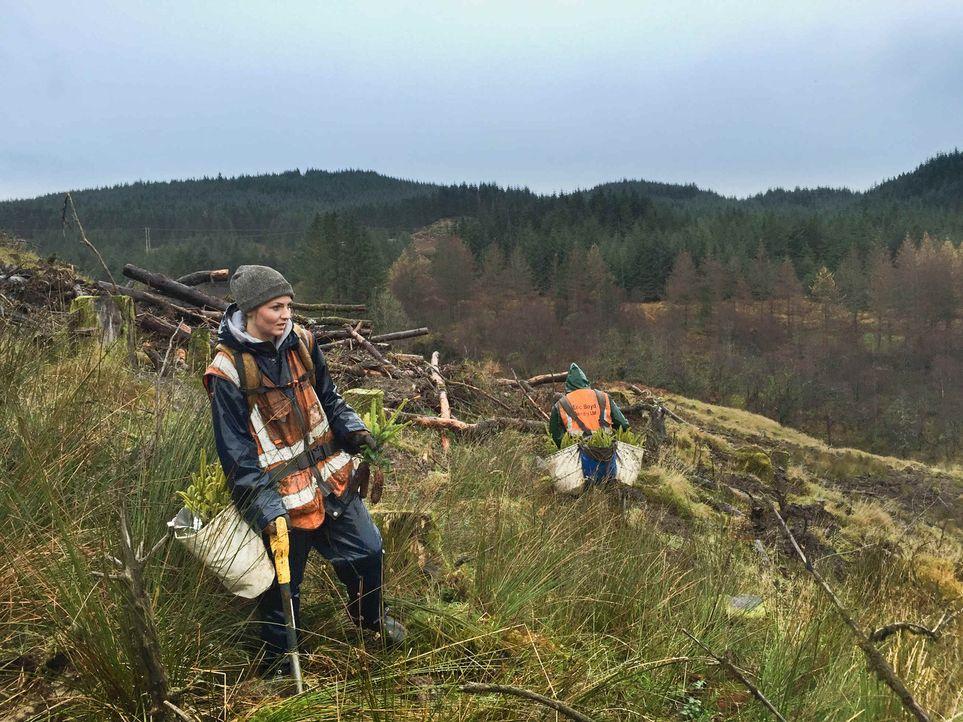 Dass es in Schottland oft kühl, feucht und stürmisch ist, darf Kim nicht stören, denn sie muss bei Wind und Wetter in den Wäldern Schottlands Bäume... - Bildquelle: kabel eins