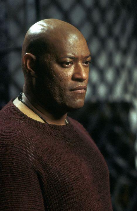 Das tut weh! Erst spät erkennt Morpheus (Laurence Fishburne), dass der Eine, auf den er seinen Glauben, sein gesamten Leben gesetzt hat, auch nur ei... - Bildquelle: Warner Bros.