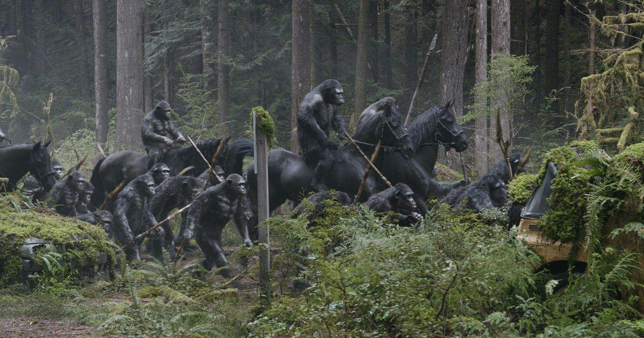 Unbehelligt von den wenigen überlebenden Menschen in den Wäldern um San Francisco haben Caesar und die Affen-Kolonie ihre eigene Zivilisation aufgeb... - Bildquelle: 2014 Twentieth Century Fox Film Corporation.  All rights reserved.