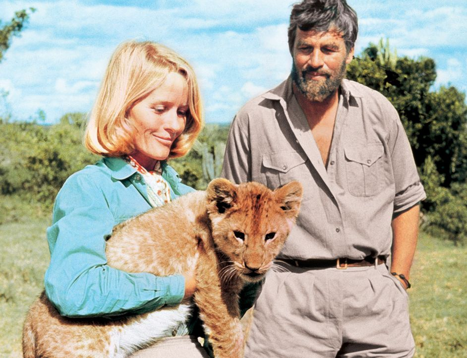 Zusammen mit ihrem Mann George (Bill Travers, r.) zieht Joy (Virginia McKenna, l.) drei Löwenbabies mit der Flasche auf. Zu dem jüngsten, der Löw... - Bildquelle: 1965, renewed 1993 Columbia Pictures Industries, Inc. All Rights Reserved.