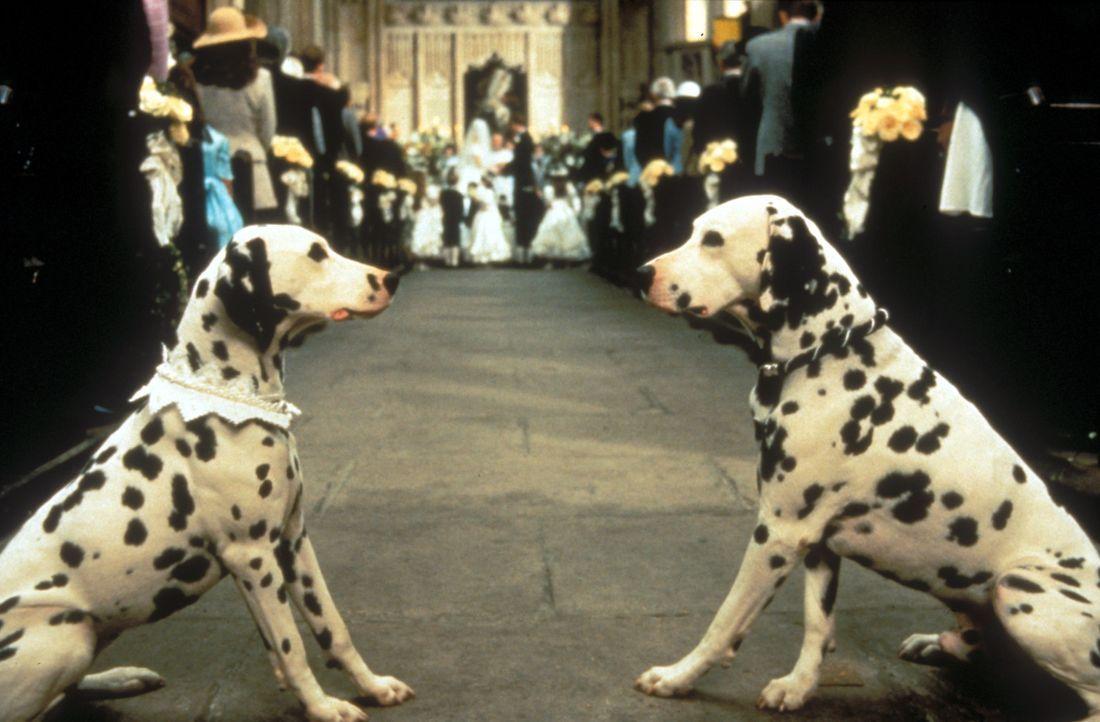 Hundeliebe auf den ersten Blick: Als der Dalmatiner Pongo (r.) auf die elegante Dalmatiner-Dame Perdi (l.) trifft, funkt es sofort zwischen den beid... - Bildquelle: Buena Vista Pictures