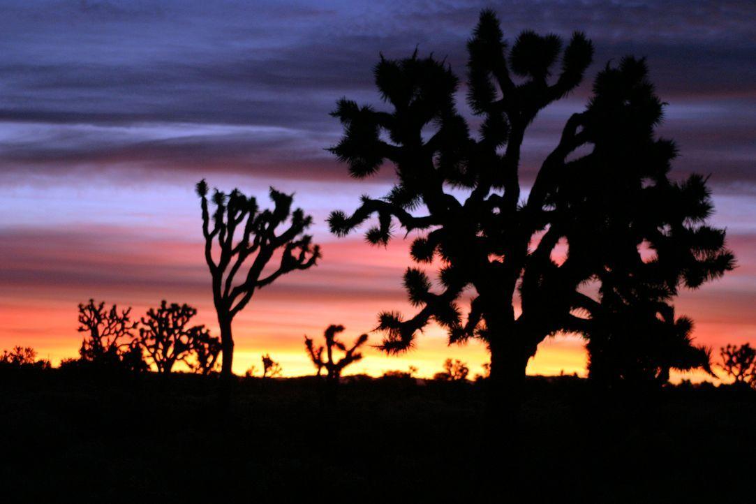 In der schönen Wüste Nevadas erleben eine Handvoll Freunde den Höllentrip ihres Lebens ... - Bildquelle: Telepool
