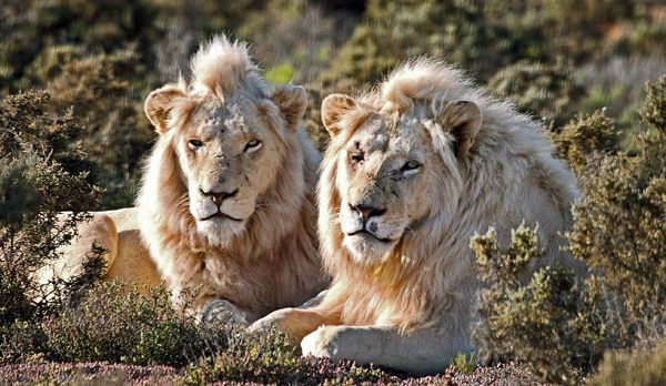 Afrika11 - Bildquelle: dpa