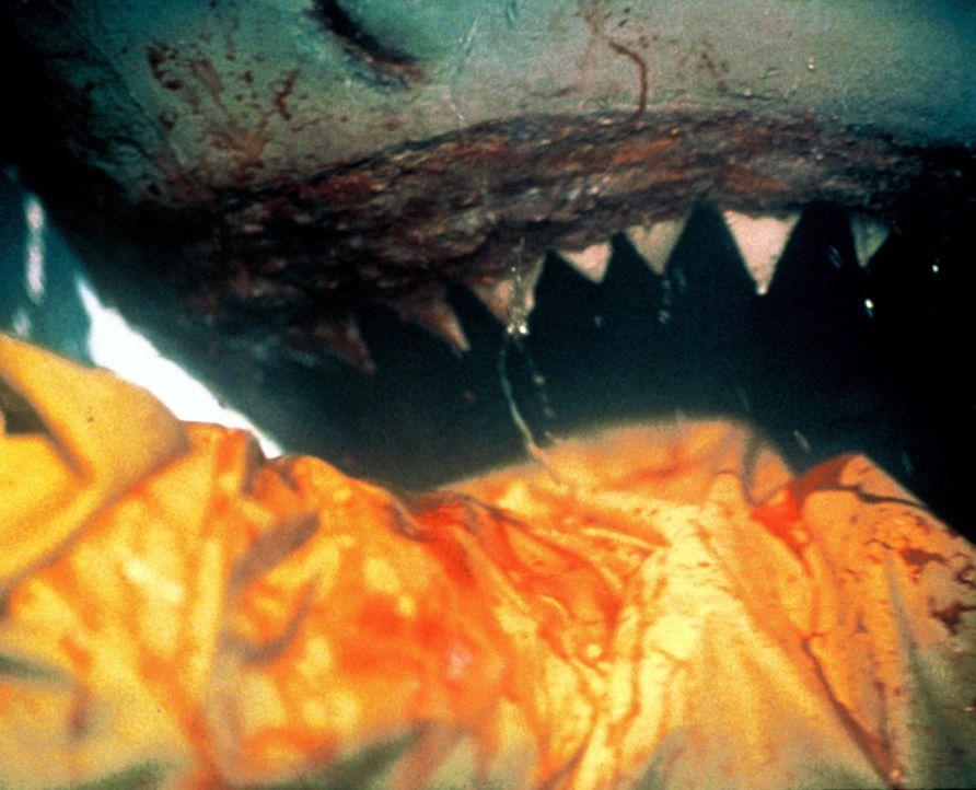 Als Schatzsucher vor der Küste Kaliforniens nach einer versunkenen spanischen Fregatte randvoll mit Gold suchen, taucht ein Rudel großer Weißer Haie... - Bildquelle: Nu Image