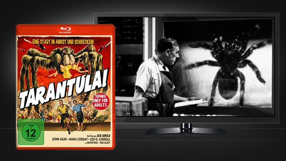 Tarantula (Blu-ray Disc) - Bildquelle: Koch Media