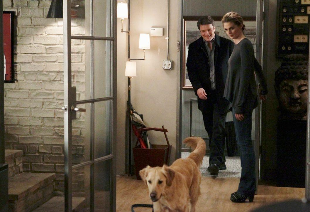 """Kann """"Royal"""", der Hund des berühmten Hundetrainers, der ermordet wurde, Kate Beckett (Stana Katic, r.) und Richard Castle (Nathan Fillion, l.) zum M... - Bildquelle: ABC Studios"""