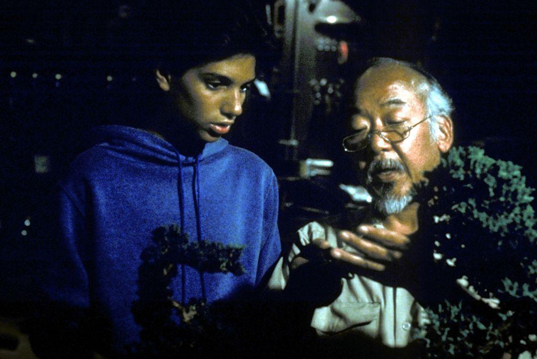"""Als Karatelehrer Miyag (Noriyuki """"Pat"""" Morita, r.) ihn zuerst nur mindere Arbeiten erledigen lässt, reagiert Daniel (Ralph Macchio, l.) verärgert.... - Bildquelle: Columbia Pictures"""