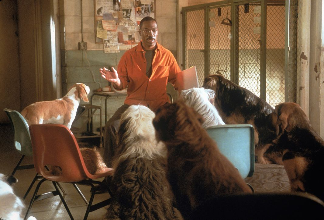 Dr. Dolittle (Eddie Murphy) versammelt alle Tiere um sich, die er finden kann, um sie zu einer gemeinschaftlichen Waldrettungs-Aktion aufzurufen ... - Bildquelle: 1998 Twentieth Century Fox Film Corporation. All rights reserved.