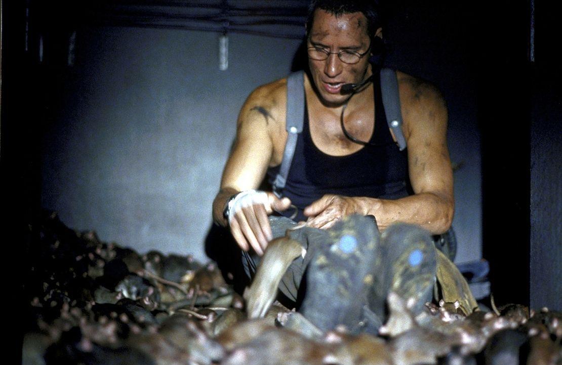 Inmitten von Millionen von Ratten soll Frank (Ralph Herforth) einen Sprengsatz deponieren. Da die kleinen, bissigen Biester ihn behindern, droht das... - Bildquelle: Jiri Hanzl ProSieben