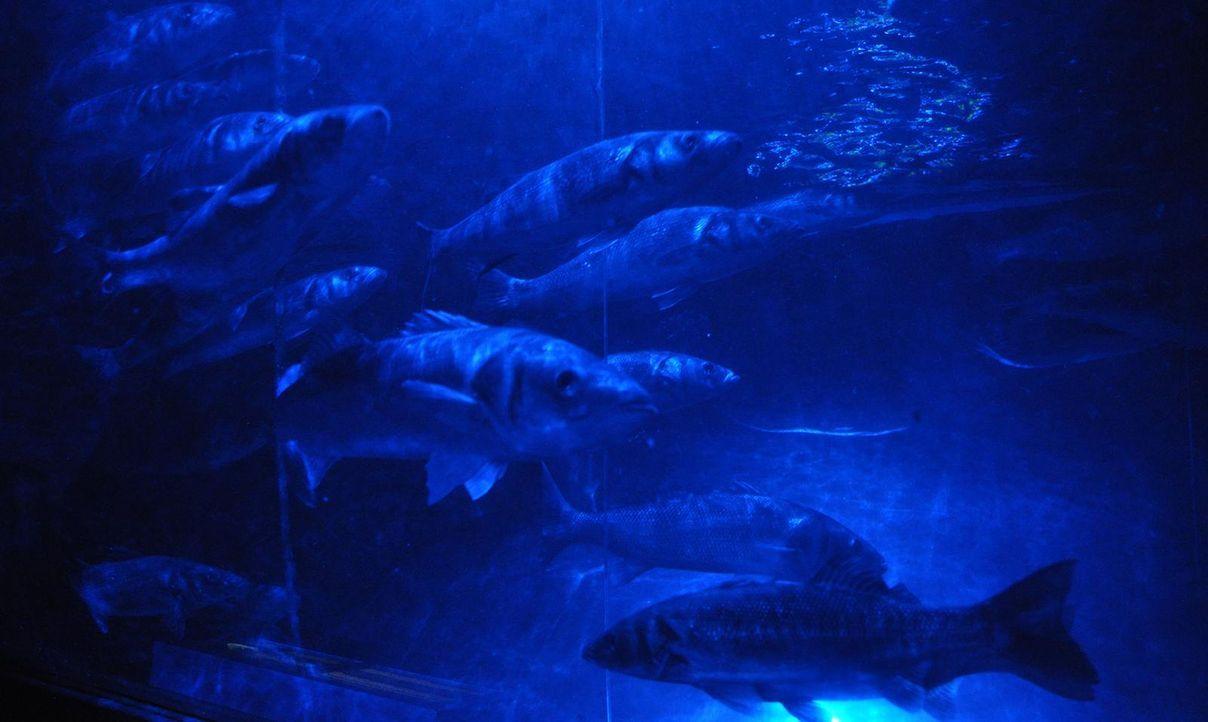 Sea life  - Bildquelle: Janus TV