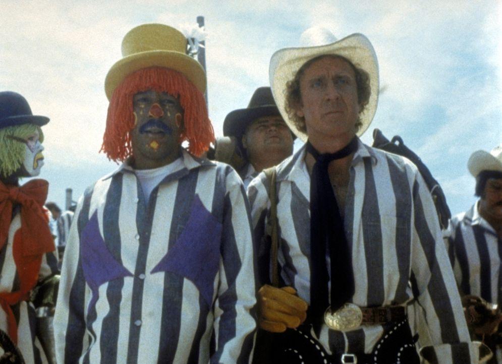Im Team mit seinen Freunden soll Skip (Gene Wilder, vorne r.) sogar an der alljährlichen Meisterschaft der Rodeoreiter teilnehmen. Harry (Richard P... - Bildquelle: Columbia Pictures Corporation