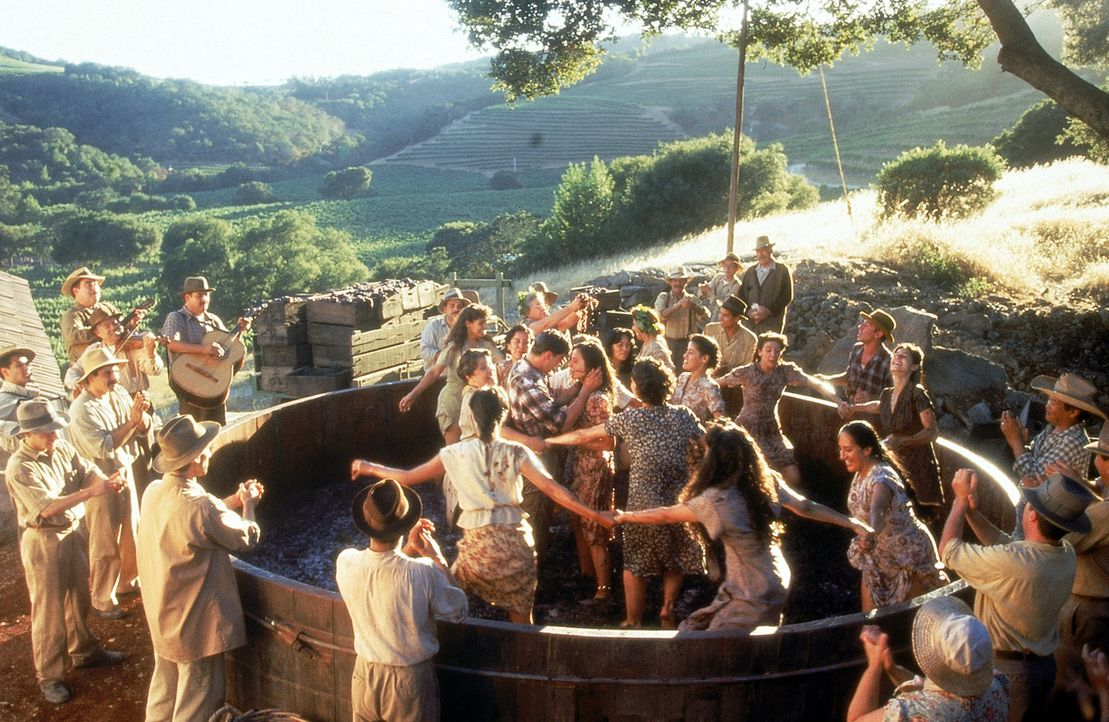 Die Traubenernte ist in vollem Gang - ein alljährlich wiederkehrendes Ritual aus harter Arbeit, ausgelassener Lebensfreude und Sinnlichkeit ... - Bildquelle: 20th Century Fox