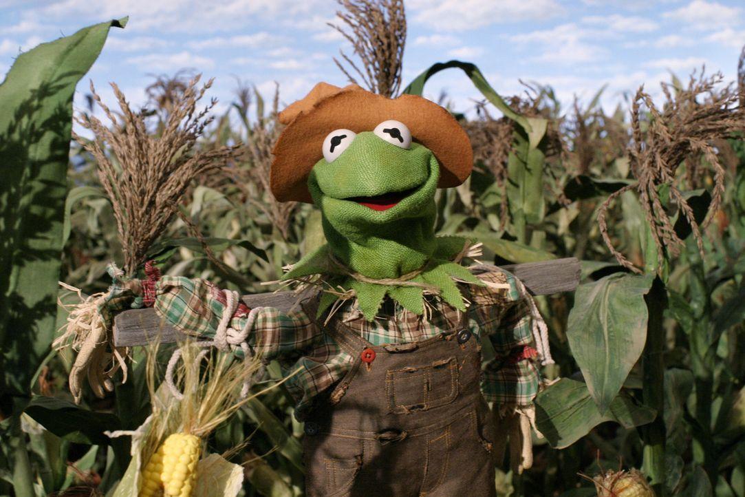Obwohl der Zauberer von Oz die Vogelscheuche davon zu überzeugen versucht, dass es ihm weder an Herz, Verstand noch Mut fehle, sondern lediglich de... - Bildquelle: The Muppets Holding Company, LLC. MUPPETS characters and elements are trademarks of the Muppet Holding Company, LLC.  All rights reserved