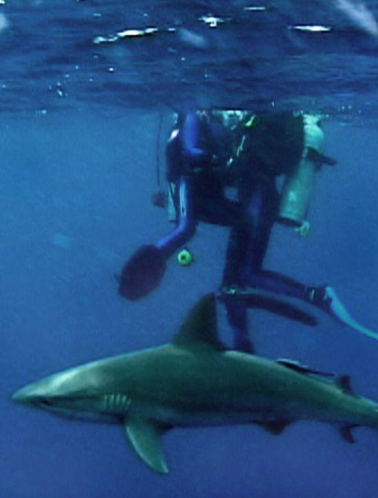 Was lauert unter Susan (Blanchard Ryan, l.) und Daniel (Daniel Travis, r.) im undurchsichtigen Ozean? Haie ... - Bildquelle: 2004 Lions Gate Films. All Rights Reserved.