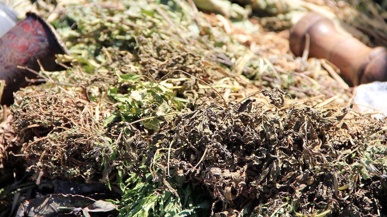 Getrocknetes Stevia - Bildquelle: PR