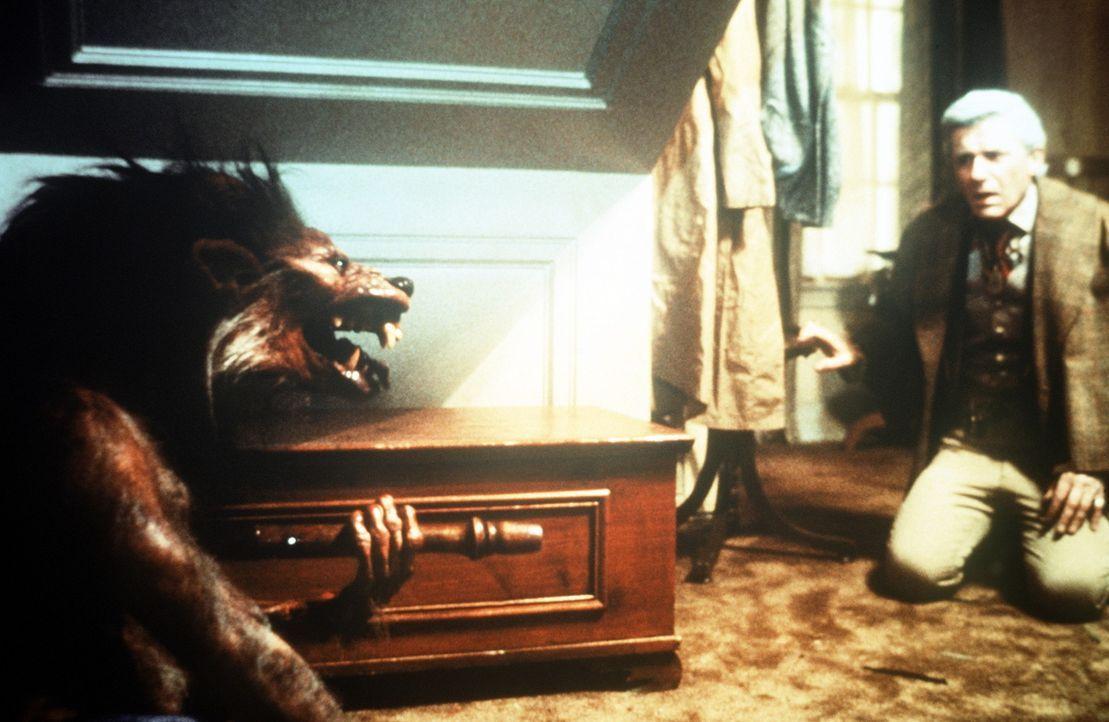 Vampirkiller Peter Vincent (Roddy McDowall) hat alle Hände voll zu tun ... - Bildquelle: Columbia Pictures