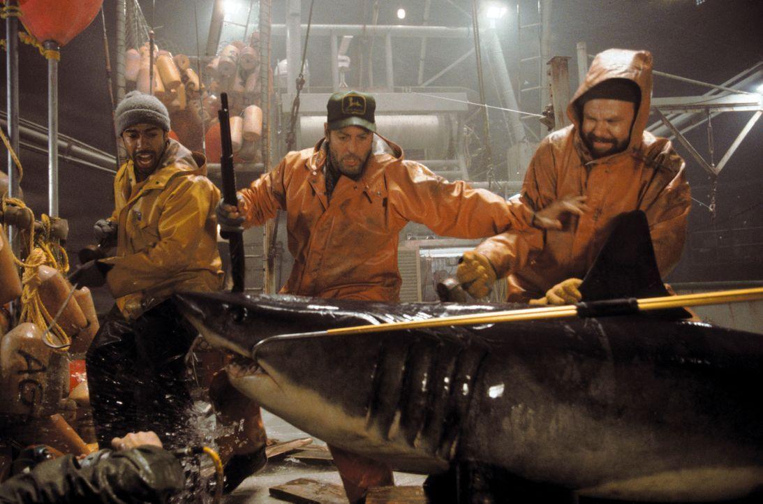 Endlich stoßen Billy (George Clooney, M.), Dale (John C. Reilly, r.) und Alfred (Allen Payne, l.) auf reiche Fischgründe. Nachdem jedoch die Kühlmas... - Bildquelle: Warner Bros. Pictures