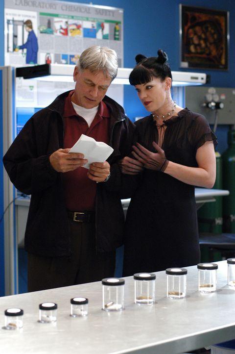 Stehen vor einem Rätsel: Gibbs (Mark Harmon, l.) und Abby (Pauley Perrette, r.) ... - Bildquelle: TM &   2006 CBS Studios Inc. All Rights Reserved.