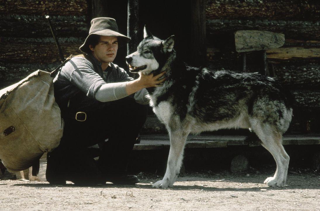 Eines Tages trifft Jack (Ethan Hawke) den Wolf wieder, der ihm einst das Leben rettete. Er beschließt, seinen wölfischen Freund aus den Klauen sei... - Bildquelle: Walt Disney Pictures