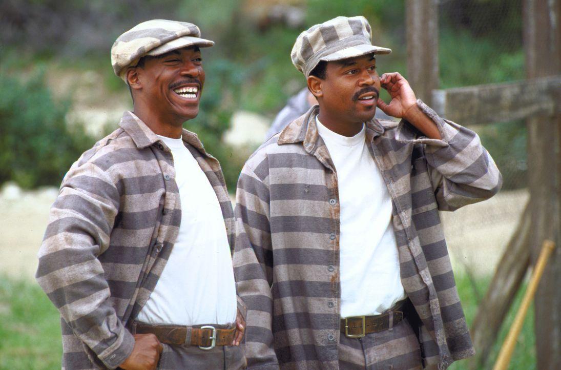 Als sie zur Tilgung ihrer Schulden illegalen Schnaps transportieren, werden Claude (Martin Lawrence, r.) und Ray (Eddie Murphy, l.) geschnappt und l... - Bildquelle: 1999 Universal Studios. All rights reserved