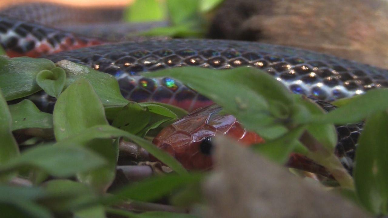 Sumatra 21 - Bildquelle: kabel eins