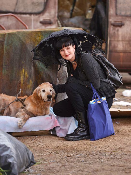 Abby (Pauley Perrette) setzt alles daran, einer jungen Obdachlosen dabei zu helfen, wieder mit ihrer Familie zusammenzukommen ... - Bildquelle: CBS Television