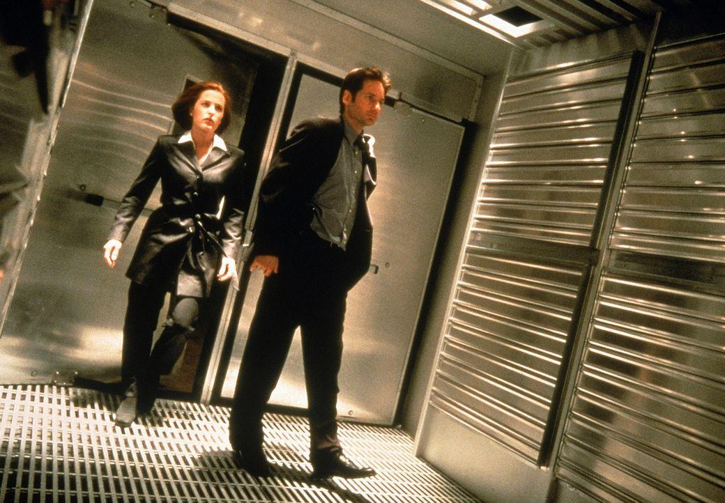 Die FBI-Agenten Scully (Gillian Anderson, l.) und Mulder (David Duchovny, r.), die früher die X-Akten bearbeitet haben, werden bei einer Bombendroh... - Bildquelle: Twentieth Century-Fox Film Corporation