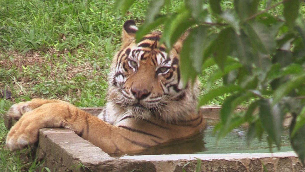 Sumatra 16 - Bildquelle: kabel eins