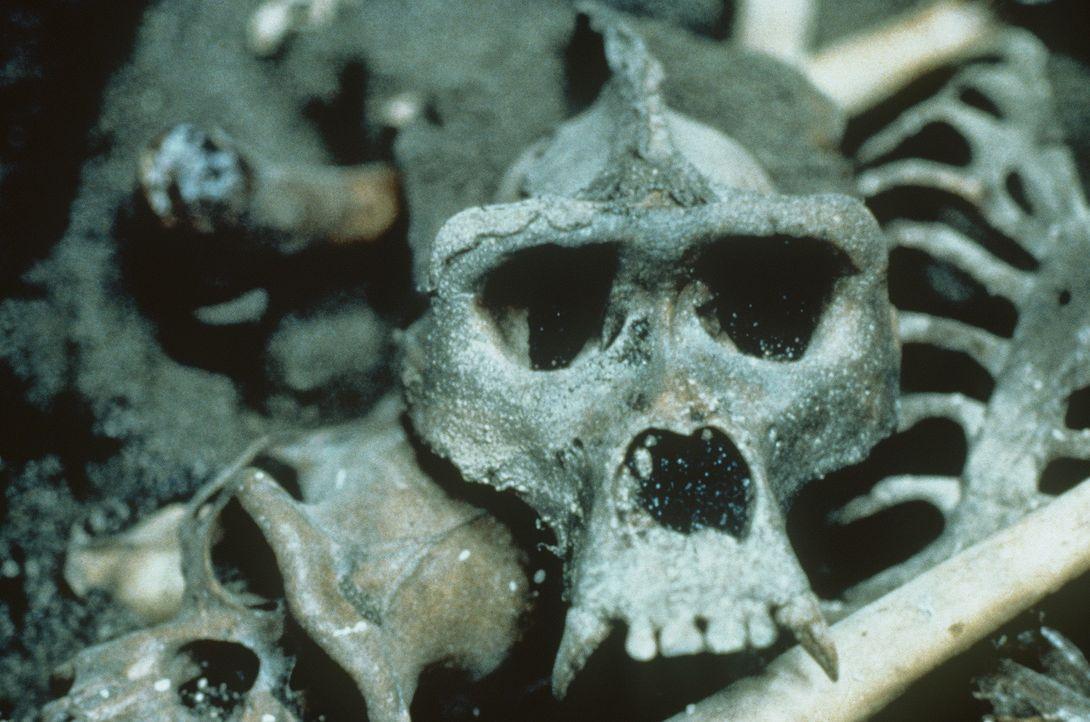 Dieser Knochenfund lässt nichts Gutes ahnen... - Bildquelle: Paramount Pictures