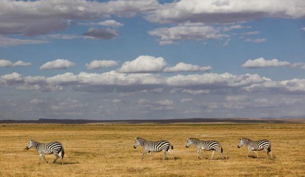 Afrika14 - Bildquelle: dpa