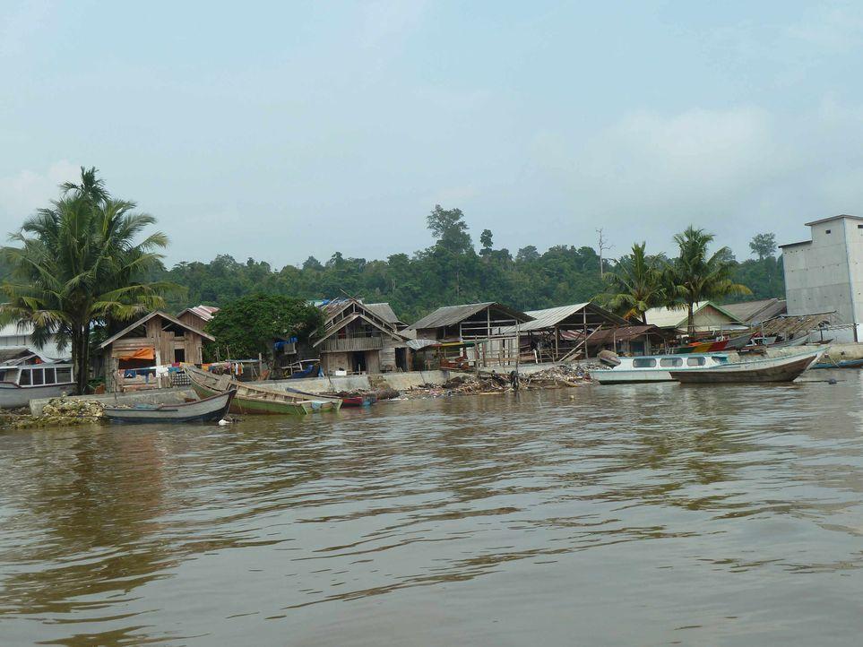 Bei den Mentawai-Indianern auf Siberut Island tief im Indonesischen Dschungel und fernab der Zivilisation sollen die beiden Krawallkids Jarvis (15)... - Bildquelle: SAT.1