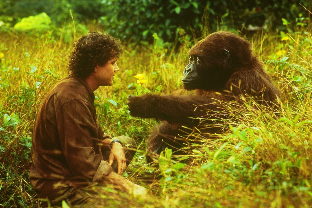 Ein bemerkenswerter Gorilla und sein Lehrer (Dylan Walsh) ... - Bildquelle: Paramount Pictures