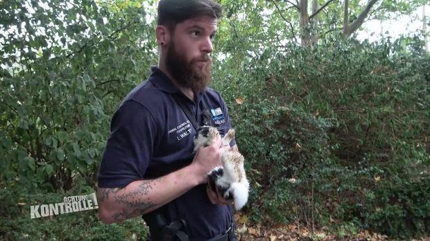 Achtung Kontrolle - Achtung Kontrolle! - Thema U.a: Flink, Flinker, Hasen - Kaninchen Auf Der Spur