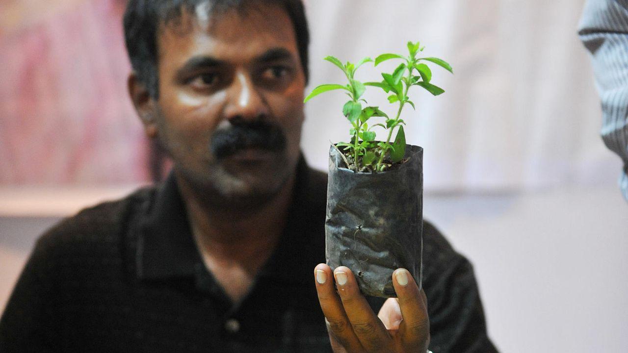 Verkäufer auf Markt mit Steviapflanze - Bildquelle: AFP / Noah SEELAM
