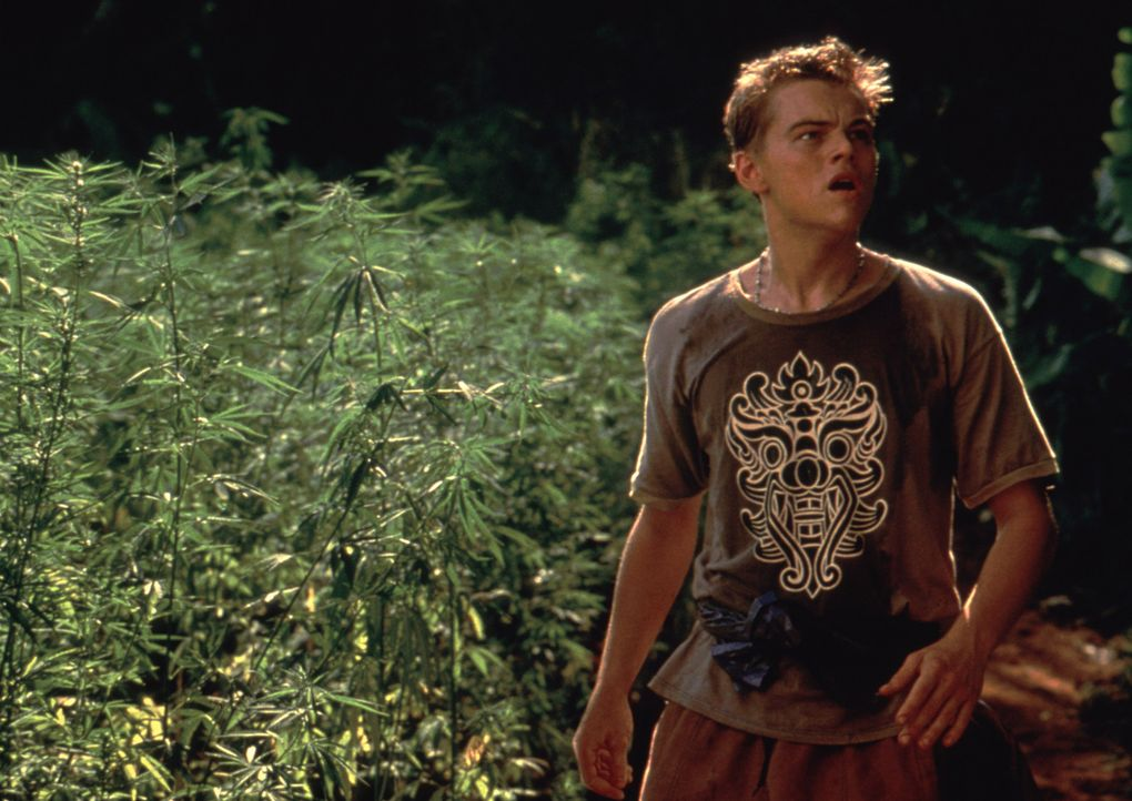Das erste was Richard (Leonardo DiCaprio) auf der geheimnisvollen Insel entdeckt, ist ein riesiges Marihuana-Feld, das jedoch sehr streng bewacht wi... - Bildquelle: 2011 Twentieth Century Fox Film Corporation. All rights reserved.
