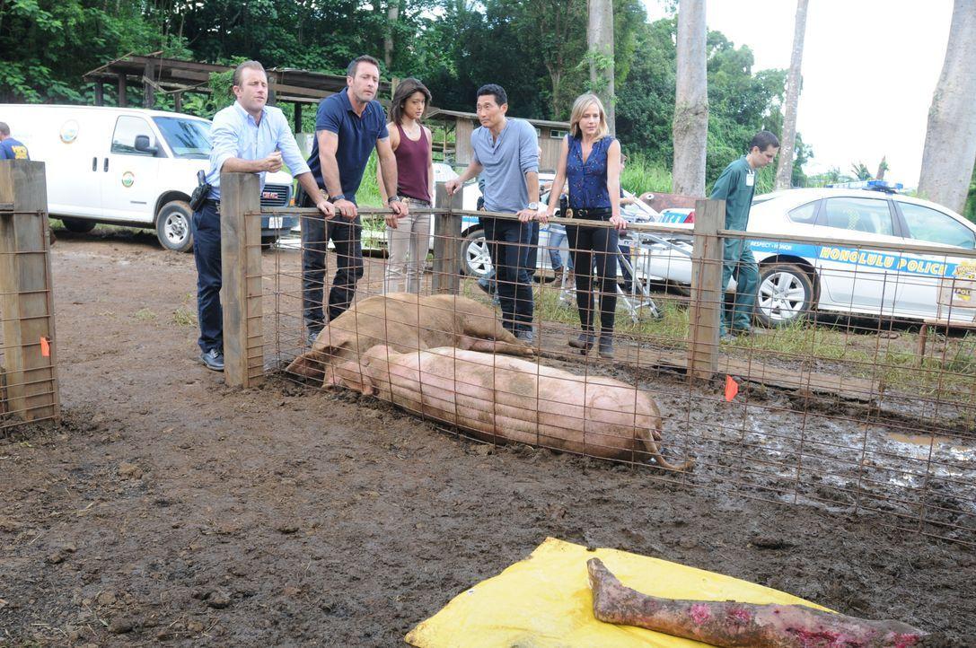 Eine Schweinehüterin findet beim Füttern einen bereits von den Schweinen halb zerfressenen Leichnam. (v.l.n.r.) Danny (Scott Caan), Steve (Alex O'Lo... - Bildquelle: Norman Shapiro 2015 CBS Broadcasting, Inc. All Rights Reserved / Norman Shapiro