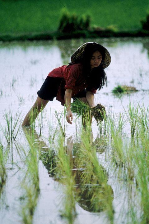 Le Ly (Hiep Thi Le) verbringt eine sorgenfreie Kindheit auf einer Reisplantage, als 1963 der Krieg ausbricht. Ihr Dorf in Zentral-Vietnam wird von S... - Bildquelle: Warner Bros.