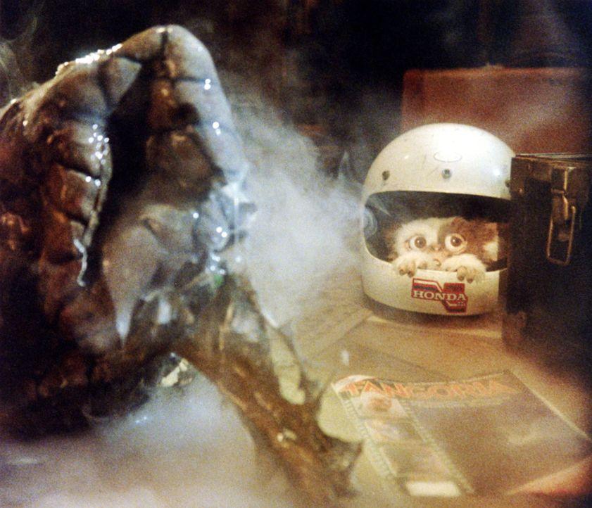 Die Horde wild gewordener Monster fällt über die kleine Stadt her und droht alles in ihrem Weg zu zerstören. Selbst Gizmo, der Ur-Gremlin, versteckt... - Bildquelle: Warner Bros.