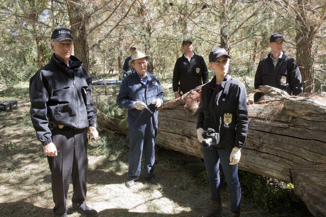 Als ein Navy-Offizier im Ruhestand ermordet wird, beginnen Gibbs (Mark Harmon, l.), Ducky (David McCallum, 3.v.l.), Jimmy (Brian Dietzen, 2.v.l.), D... - Bildquelle: Robert Voets CBS Television