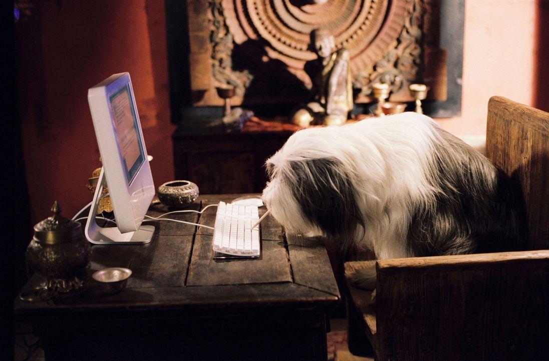 Nach einem Hundebiss wird der Staranwalt Dave Douglas immer wieder - natürlich zur unpassensten Zeit - in einen Hund verwandelt ... - Bildquelle: Disney Enterprises, Inc. All rights reserved