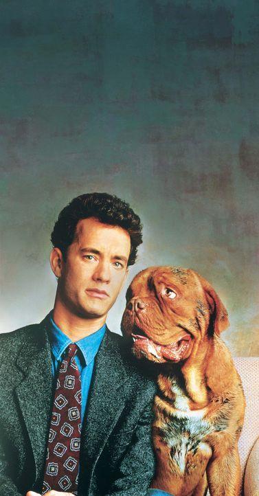 Detective Scott Turner (Tom Hanks) leidet unter einem krankhaften Sauberkeitswahn und hasst Unordnung. Seine heile Welt gerät vollkommen aus den Fu... - Bildquelle: Touchstone Pictures