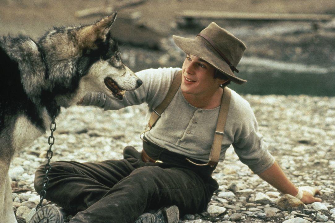 Auf der Suche nach der Goldmine seines verstorbenen Vaters freundet sich der junge Jack (Ethan Hawke) mit einem Wolf an ... - Bildquelle: Walt Disney Pictures