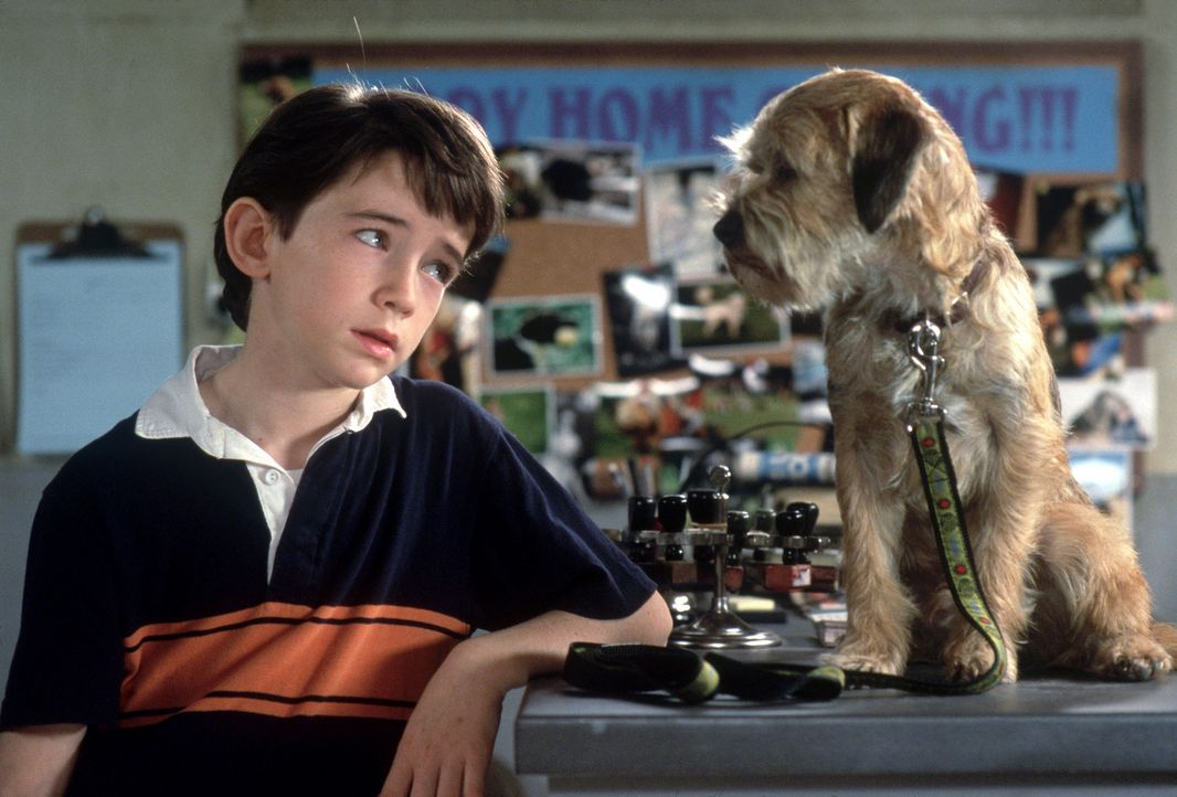 Das ist ein dicker Hund: Der Köter, den Owen (Liam Aiken) im Tierheim aussucht, entpuppt sich als außerirdischer Kläffer vom Hundestern Sirius, d... - Bildquelle: Metro-Goldwyn-Mayer Studios Inc. All Rights Reserved.