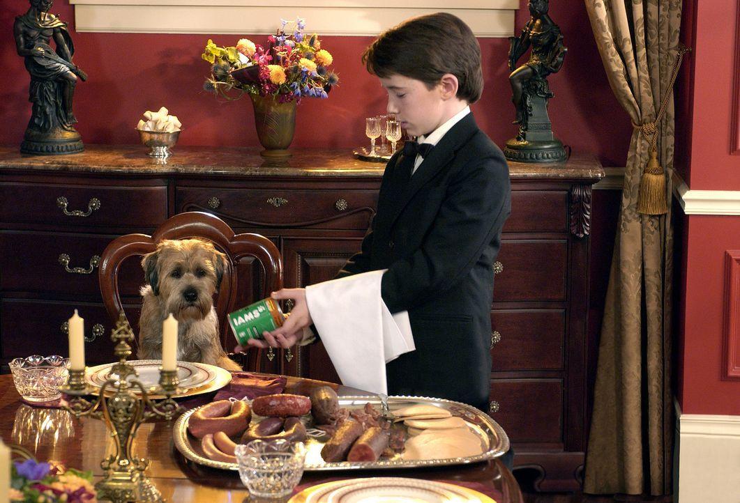 Noch ahnt Herrchen Owen (Liam Aiken) nicht, dass Hubble (l.) undercover auf der Erde weilt. Im Auftrag des Hunde-Planeten Sirius soll er überprüfe... - Bildquelle: Metro-Goldwyn-Mayer Studios Inc. All Rights Reserved.