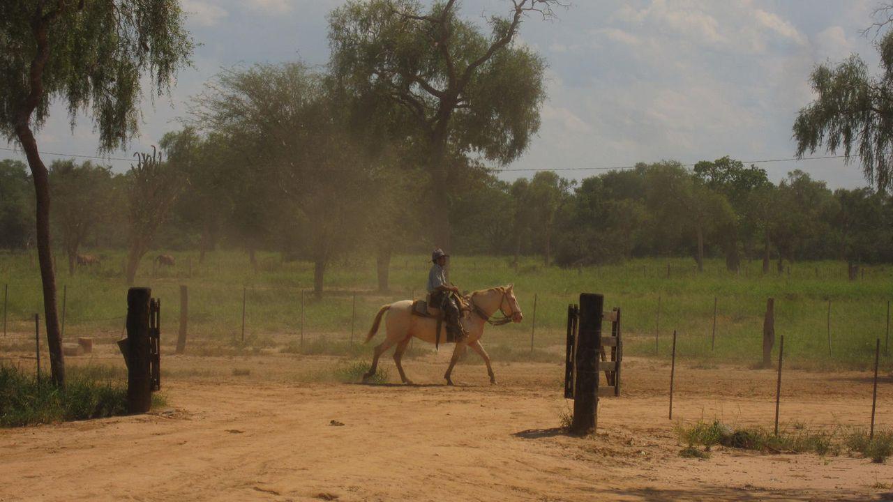Cowboys in Südamerika