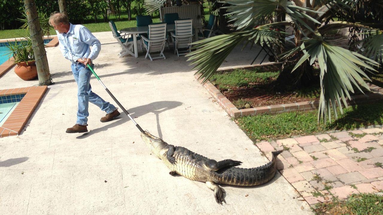 Crocodile hunters! - Bildquelle: kabel eins