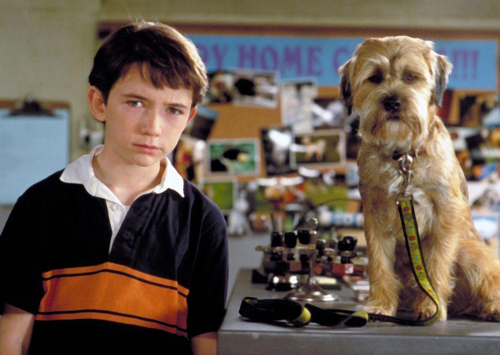 """Seit einem nächtlichen """"intergalaktischen Unfall"""" versteht Owen (Liam Aiken) die Hundesprache. Ein unschätzbares Plus im Umgang mit dem hochintell... - Bildquelle: Metro-Goldwyn-Mayer Studios Inc. All Rights Reserved."""