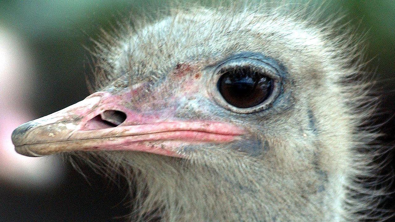Die lustigsten Fakten aus der Tierwelt - Bildquelle: AFP