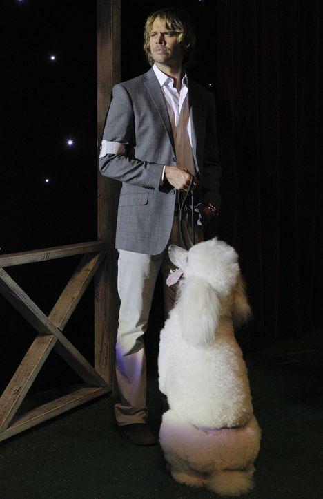 Bei den Ermittlungen in einem neuen Fall kommt Deeks (Eric Christian Olsen) auf einen Hund ... - Bildquelle: CBS Studios Inc. All Rights Reserved.